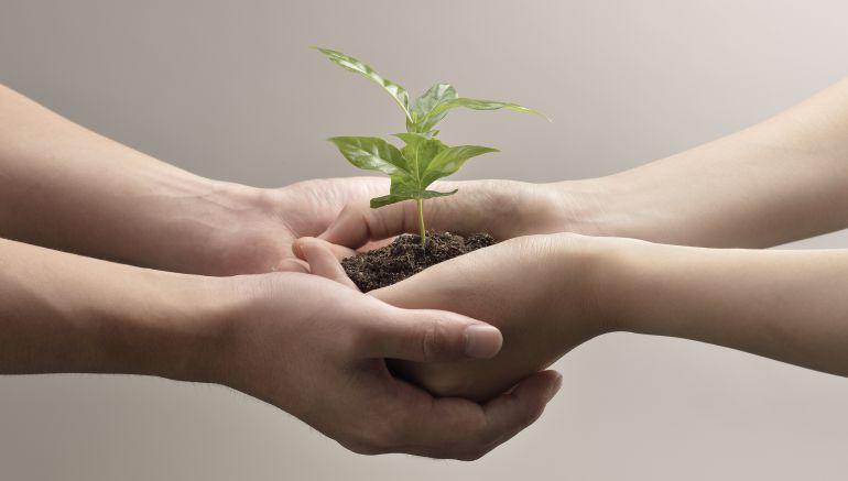 Manos Con Planta