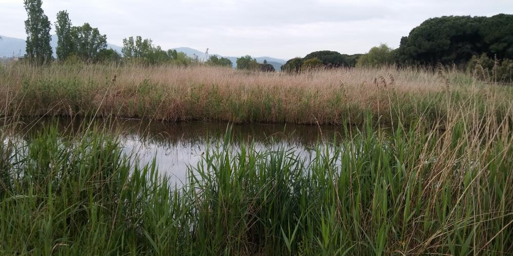 (ES) Información Sobre La Reutilización De Aguas Y El Covid-19