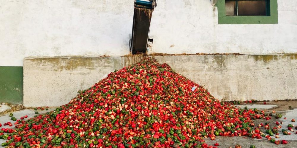 (ES) Problemática De La Gestión De Los Residuos Orgánicos Desde La Industria Agroalimentaria De Transformados Vegetales