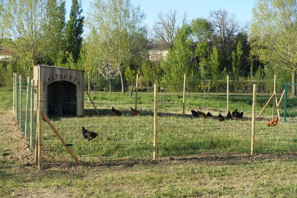 (FR) Au Sicoval, Les Nouvelles Chargées De Mission 0.déchet Sont… Des Poules